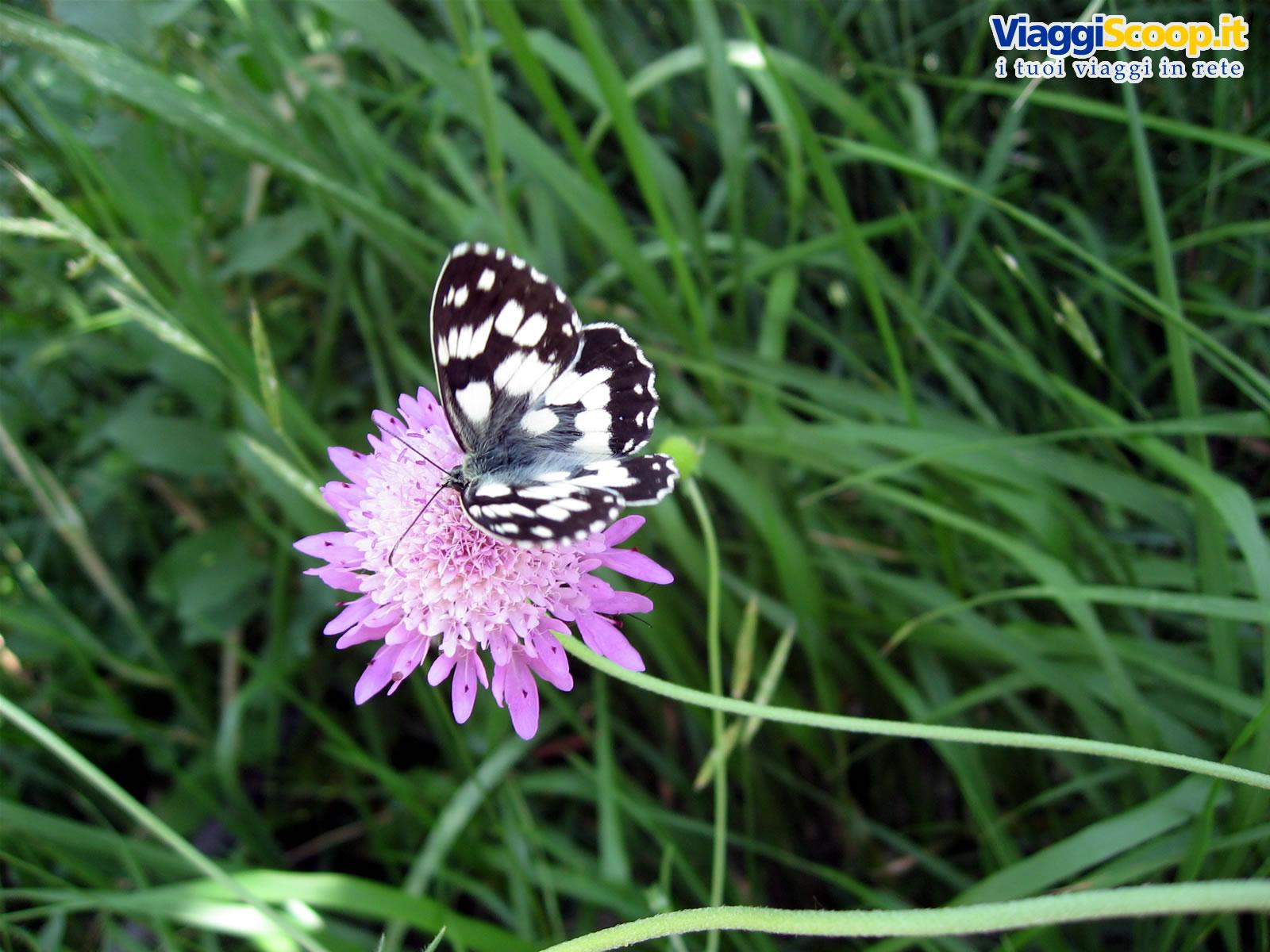 Sfondi desktop fiori floreali gli sfondi desktop pi for Immagini farfalle per desktop