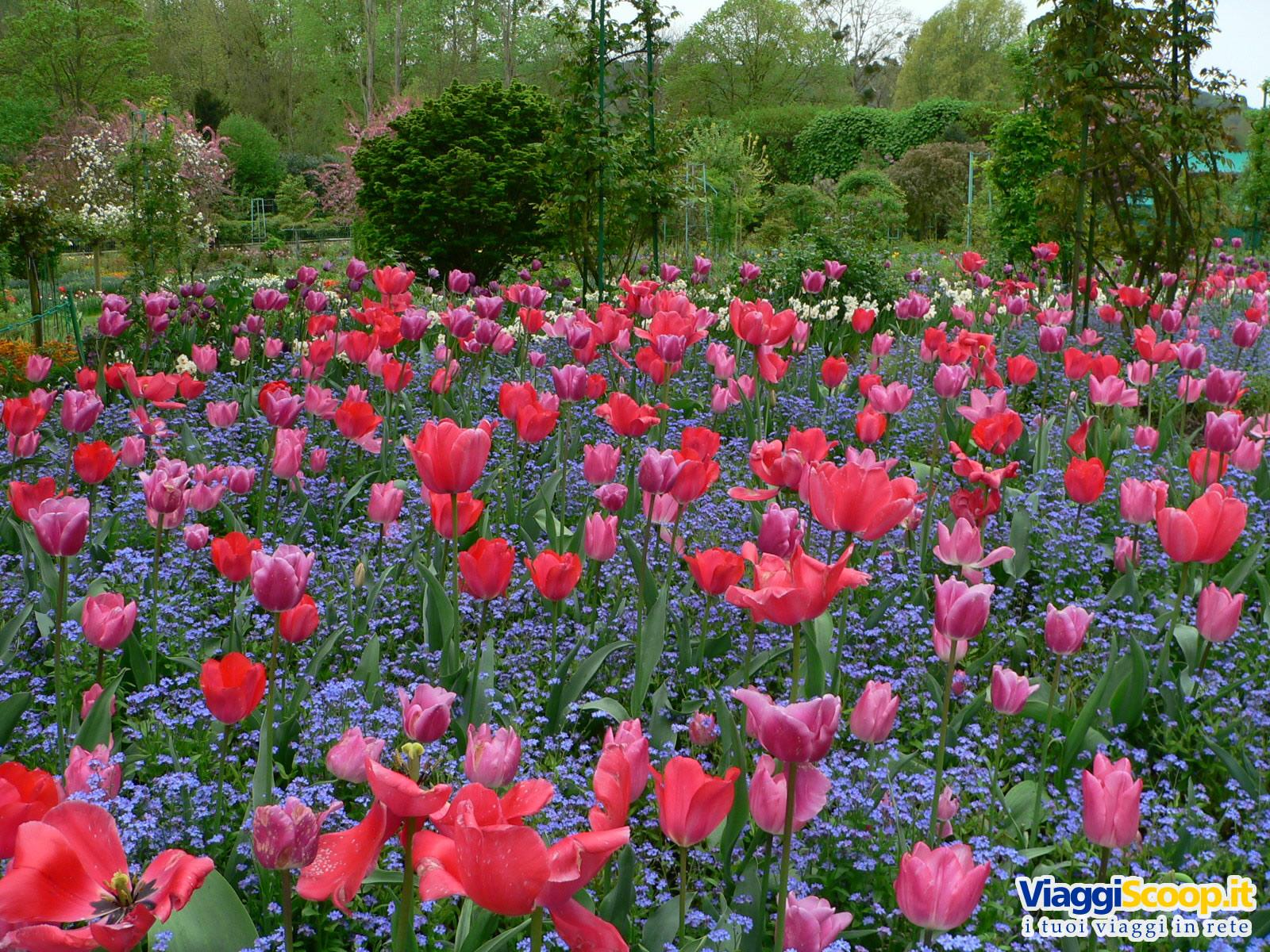 Sfondi desktop fiori floreali gli sfondi desktop pi for Immagini per desktop fiori