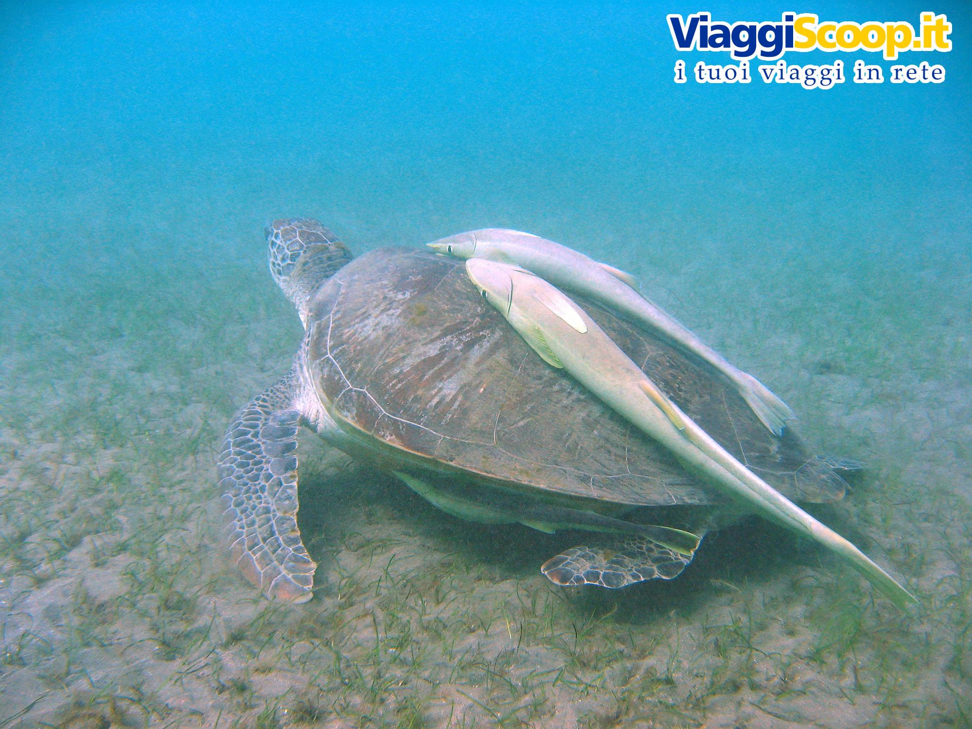 Sfondi desktop tropicali fondali marini pesci coralli foto for Sfondi pesci tropicali