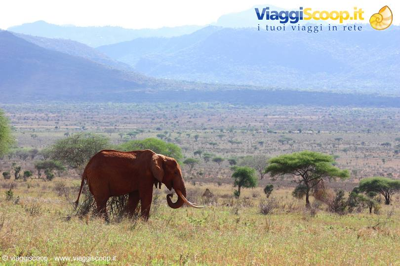 <strong>Tsavo National Park</strong>