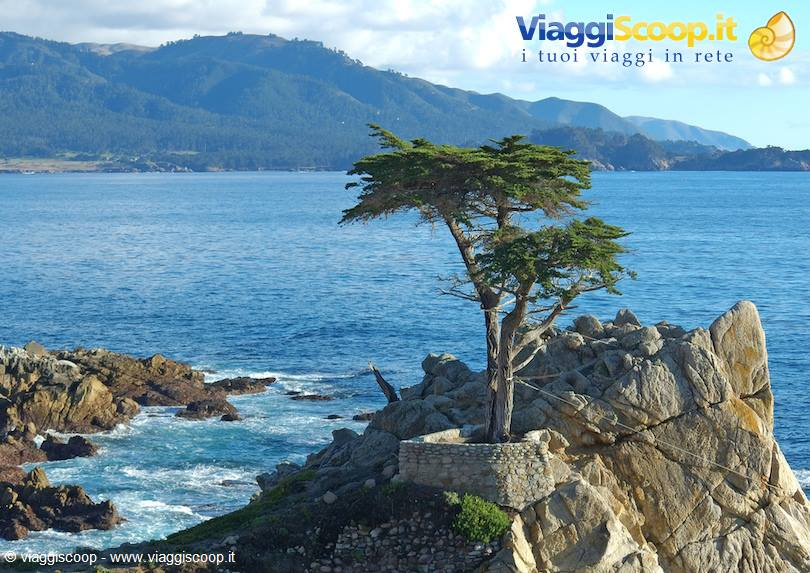 <strong>Lone Cypress</strong>