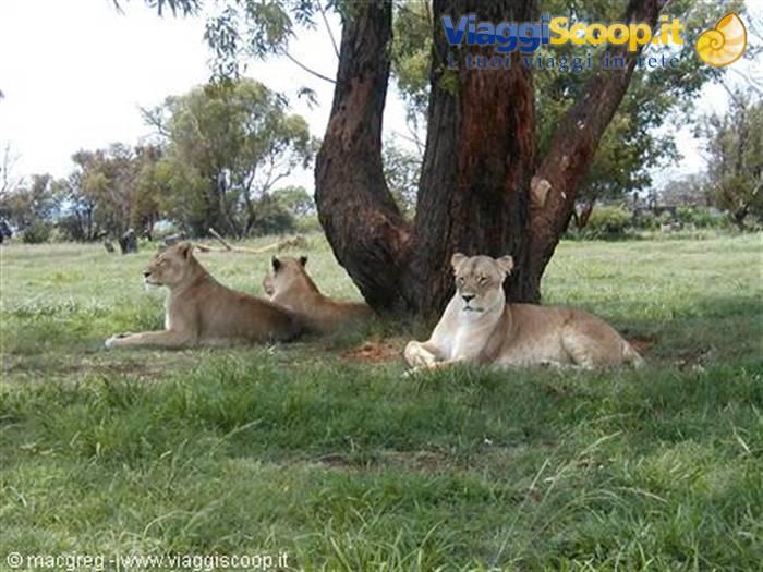100 gratis Cougar incontri siti in Sud Africa numero 1 sito di collegamento nominale