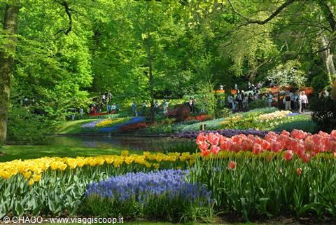 Foto i meravigliosi giardini di keukenhof olanda for Giardini meravigliosi