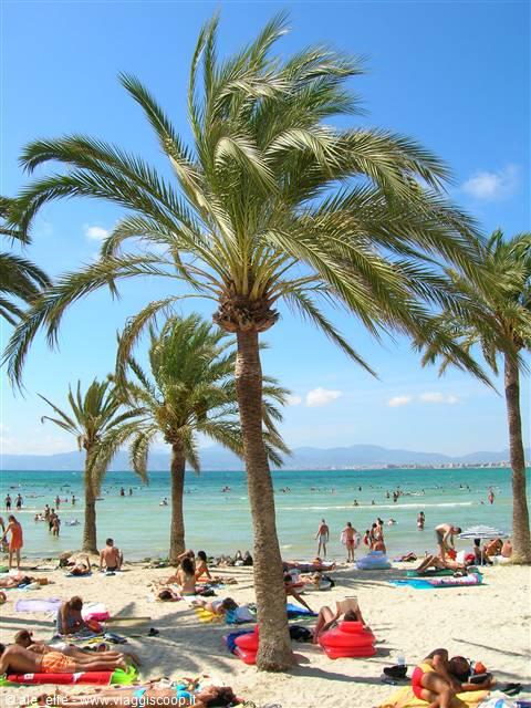 Mare da isole tropicali spagna - Colorazione pagine palma domenica ...