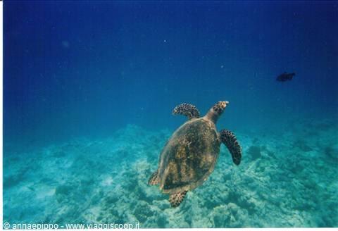 Foto sott 39 acqua maldive for Incollare sott acqua