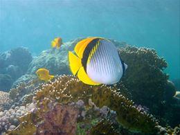 Wallpaper sfondi desktop for Sfondi pesci tropicali