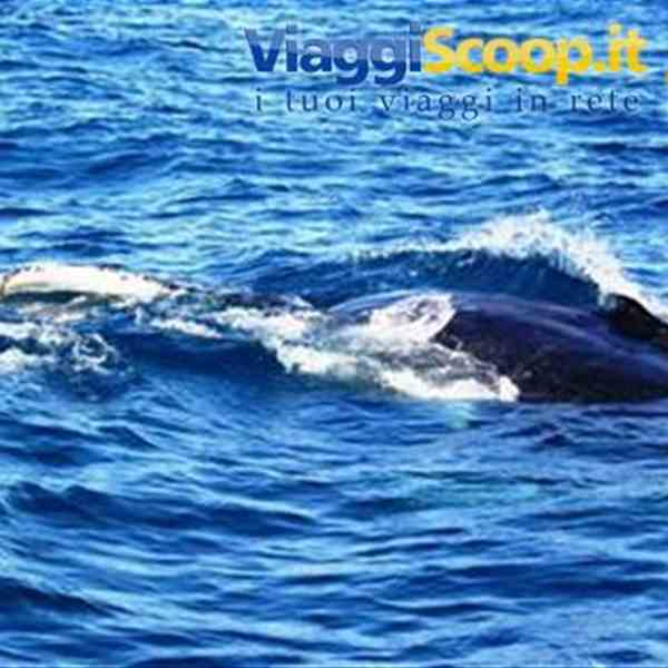 Hervey Bay: Whale Watching