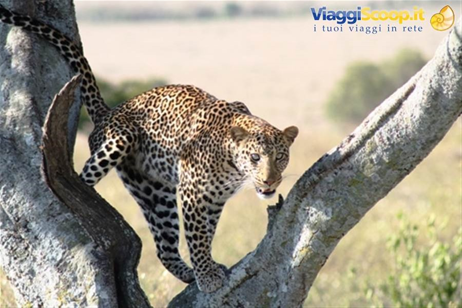 http://www.born2travel.it/ KENYA