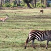 http://www.born2travel.it/ TANZANIA