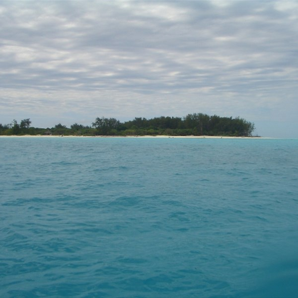 Diving: Mnemba Island