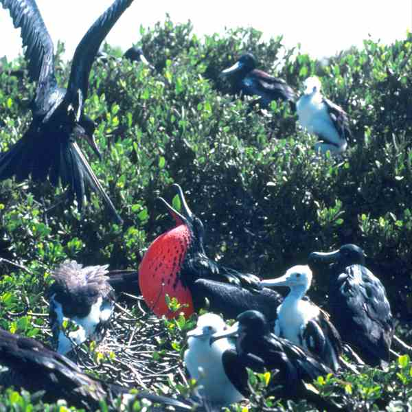 Nature Reserve of the Frigate Bird