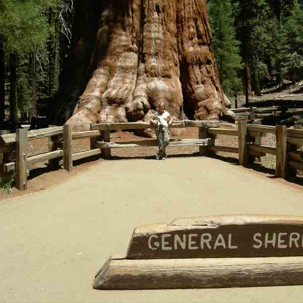 General Sherman - Sequoia N.P.