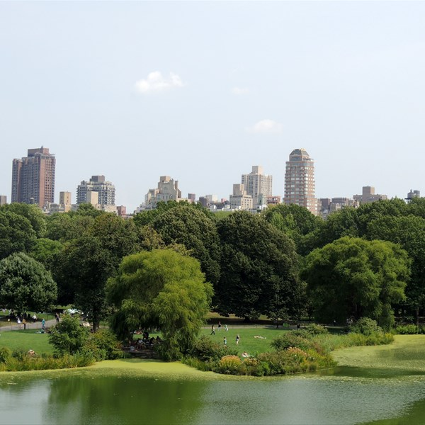 Central Park South Great Lawn