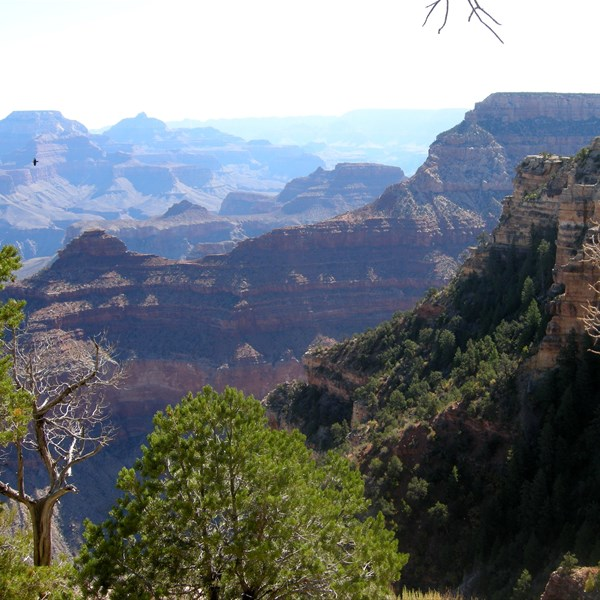 Gran Canyon - South Rim
