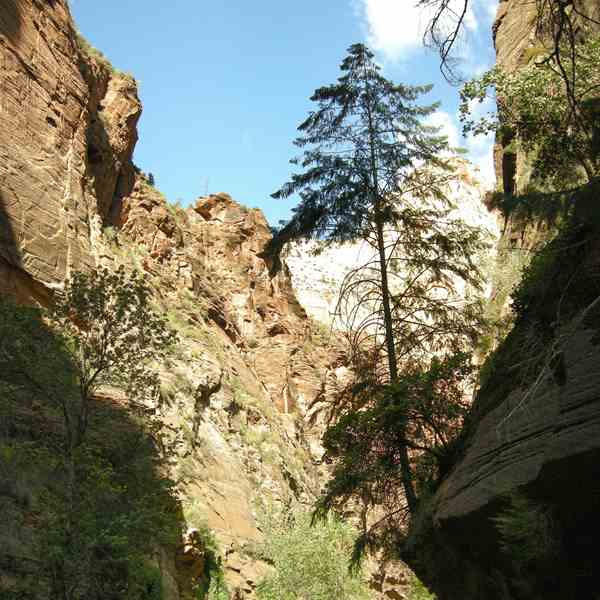 Zion Park - The Narrows and The Virgin River